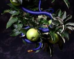 Forbidden Fruit... Provides a variety of jamsIMG 9927