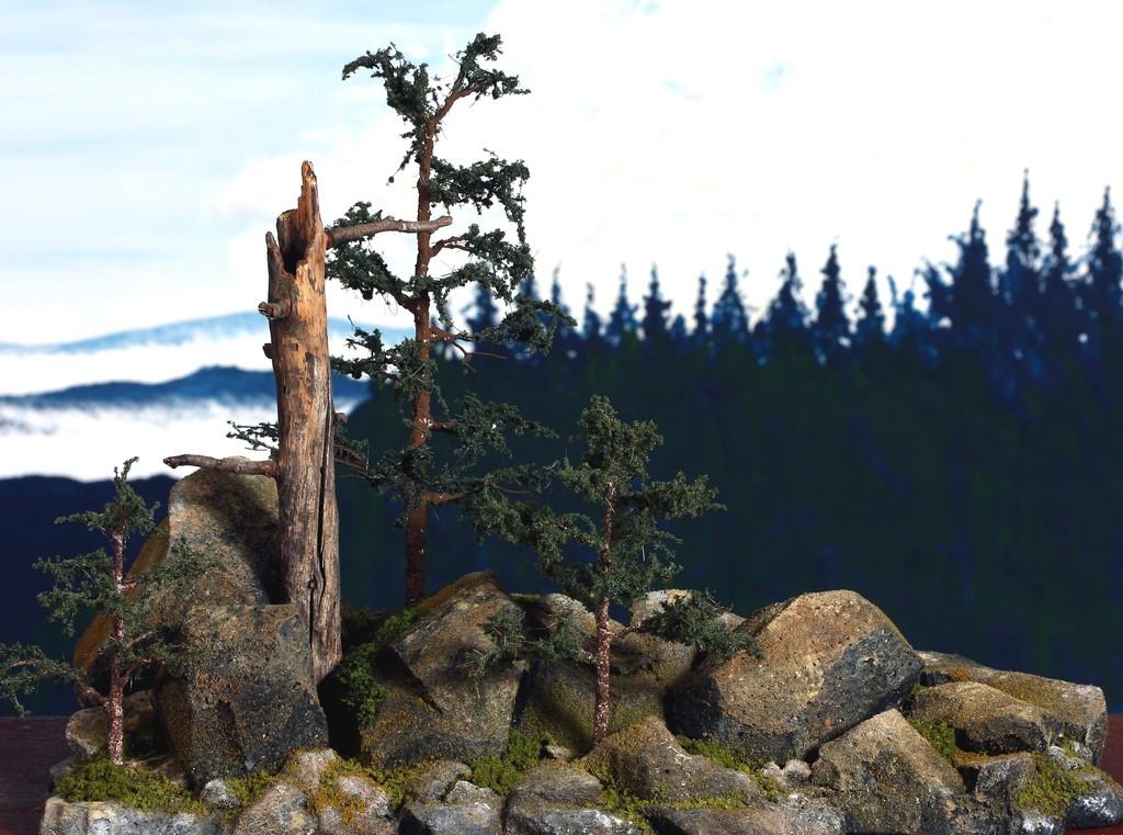dead tree and rocks 2127