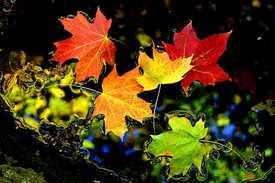 IMG 9359 002 Autumn's Evidence