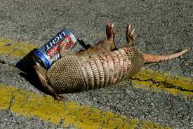 Oh no, not another drunk Armadillo